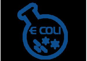Liczba Escherichia coli